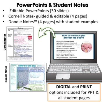 Integumentary System Unit- PowerPoint, Notes, Diagram, Activity, & Quiz