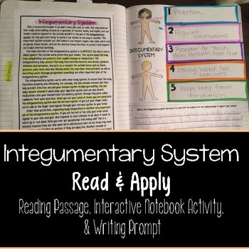 Integumentary System Reading Comprehension Interactive Notebook