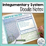 Integumentary System Doodle Notes & Diagrams - Distance Learning