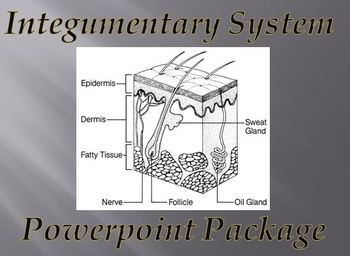 Integumentary System (Skin) Notes Powerpoint Package