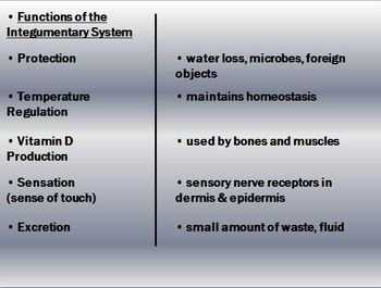 Integumentary System (Skin) Notes - Skin Functions and Disorders