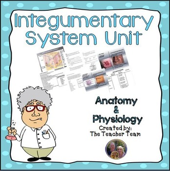 Integumentary System Skin Unit Anatomy and Physiology Biology Unit