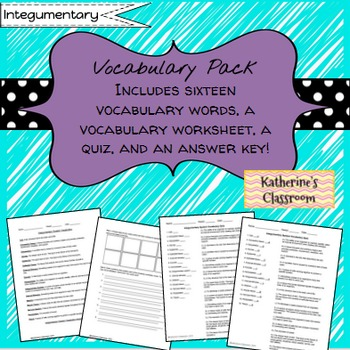 Integumentary System (Skin) Vocabulary/Vocab Pack