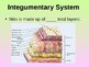 Integumentary System Student Fill-in Notes