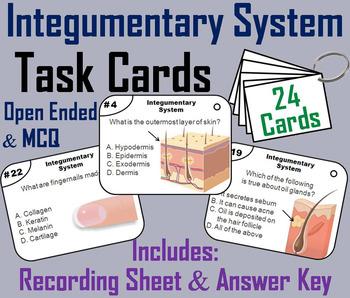 Integumentary System Task Cards: Nerves, Hair, Nails, Skin Task Cards
