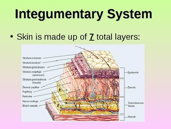 Integumentary System Teacher Notes