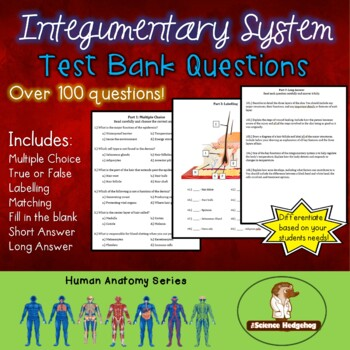 Integumentary System Test Questions by The Science Hedgehog   TpT