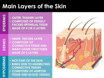 Integumentary System - Skin, Hair, Nails and Skin Disorders (Advanced)
