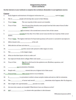 Integumentary System Worksheet - Anatomy of Cancer and Burns | TpT