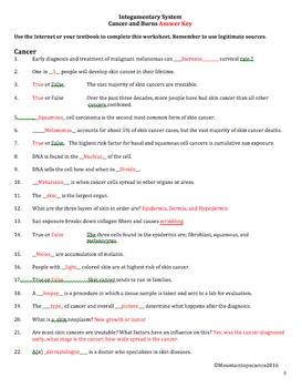 Integumentary System Worksheet - Anatomy of Cancer and Burns