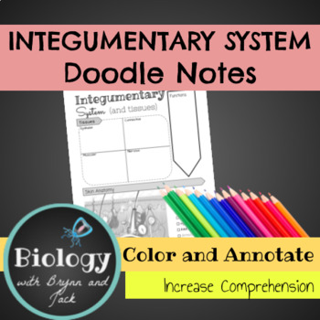 Integumentary System (and tissues) Doodle Notes