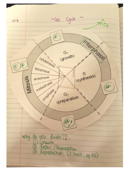 Interactice Notebook Cell Cycle Note Page