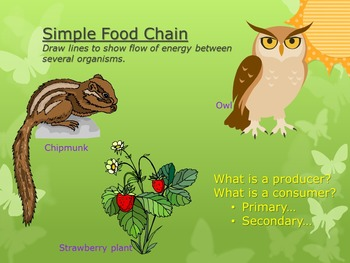 Interactions in Ecosystems (Powerpoint & 2 Group Activities)