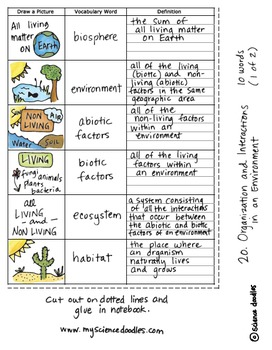 Interactions in Environments Interactive Notebook Doodle BUNDLE - Science Notes