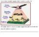 Interactions of Life (Ecology) Unit Assessments - 8-page Exam/Test, Quiz