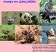 Interactions of Life/Ecology FULL UNIT: 58 Files = 19+ Lessons Activities Videos