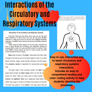 Interactions of the Circulatory and Respiratory Systems