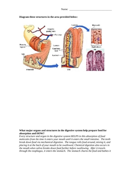 Interactions of the Digestive and Circulatory System Worksheet