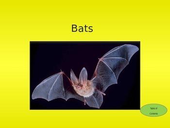 Interactive Bat Facts PowerPoint