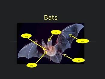 Interactive Bat Facts PowerPoint