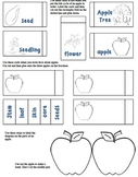 Apples Interactive Brochure: All About Apples-Non-Fiction Research CCSS Aligned