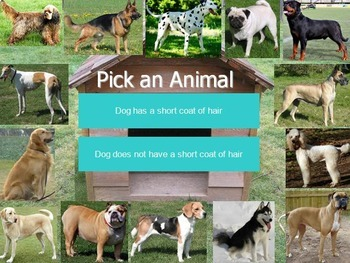 Animals Dichotomous Keys Bundle