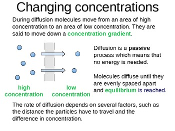 Interactive Diffusion in Living Organisms Lesson