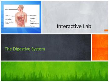 Interactive Digestive System Lab