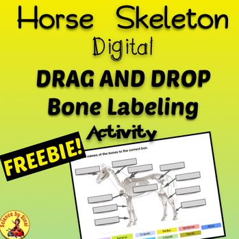 Interactive Digital Horse Skeleton Labeling  Anatomy Activity