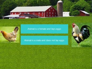 Farm Animals Activity: Farm Animals Dichotomous Key/ Farm Unit/ Farm Theme
