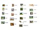French Animals Interactive Activity, Powerpoint Game