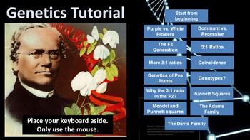 Interactive Genetics Tutorial: Mendelian Inheritance (Punnett squares)