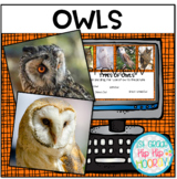 Interactive Google Slides about Owls...Informational text