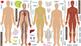 Interactive Human Body Wall Play Set