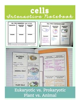 Cells Interactive Notebook