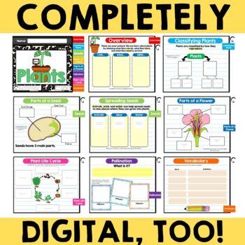 Plants {Interactive Notebook}