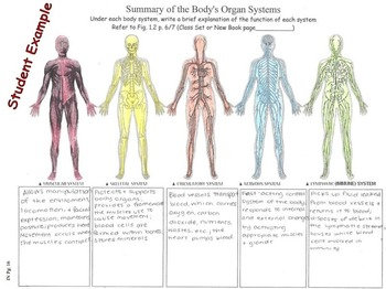 Interactive Notebook Unit Packet KEY:Intro to Human Body-Unit 1 in Series (Fall)