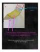 WONDERS McGraw Hill UNIT 2 WEEK 4 Interactive Notebook