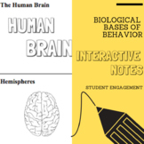 Interactive Notes | The Biological Bases of Behavior