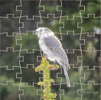 Interactive Puzzle - Canada Jay