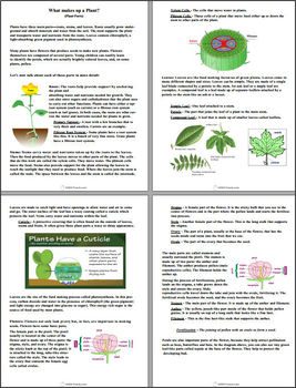 Interactive Science - Botany (Learning about Plants)