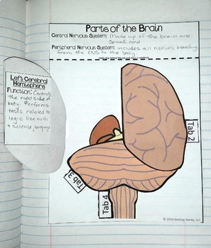 Human Body Systems - Interactive Notebook