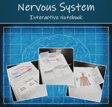 Interactive Science Notebook - Human Organ Systems (The Nervous System)