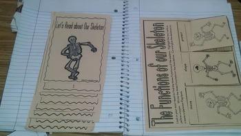 Skeleton Interactive Notebook