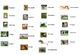 Spanish Animals Interactive Activity, Powerpoint Game