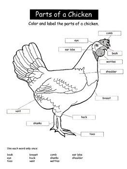 Interactive Student Notebook Chicken Parts ID