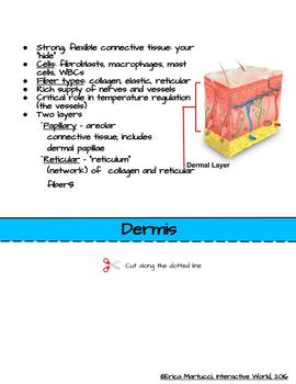Interactive World Interactive Flip Book and Quiz - The Integumentary System