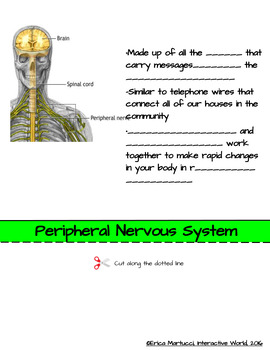 The Nervous System Interactive Flip Book and Quiz