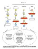 Intercellular Signaling Pathways: Endocrine System