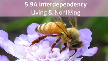 Interdependence (Living and Nonliving)